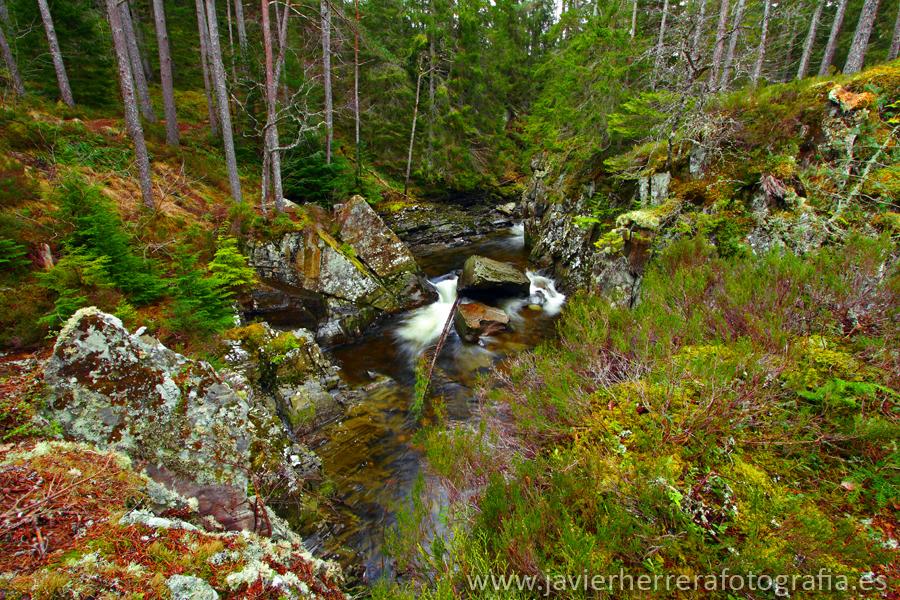 El bosque encantado by javierherrera86