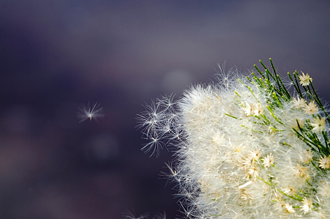 Artistic WEED by fileboy