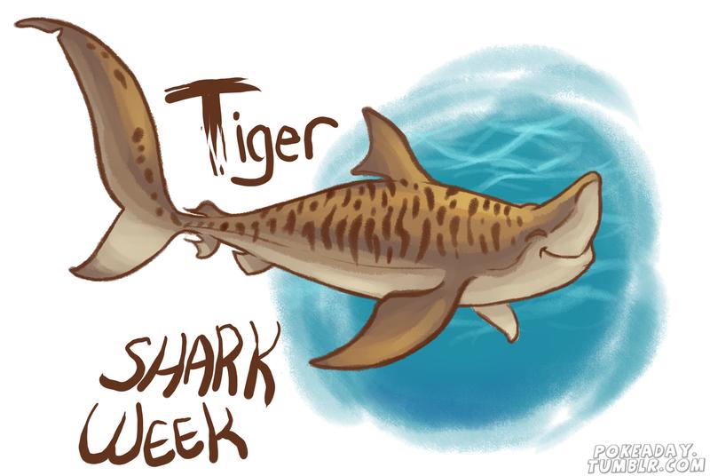 tiger shark by pokeaday on deviantart rh pokeaday deviantart com tiger shark cartoon images tiger shark cartoon images