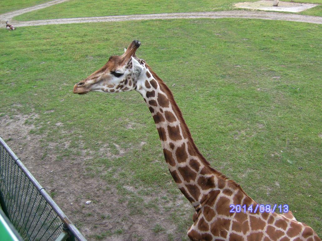Giraffe by HybritLemur