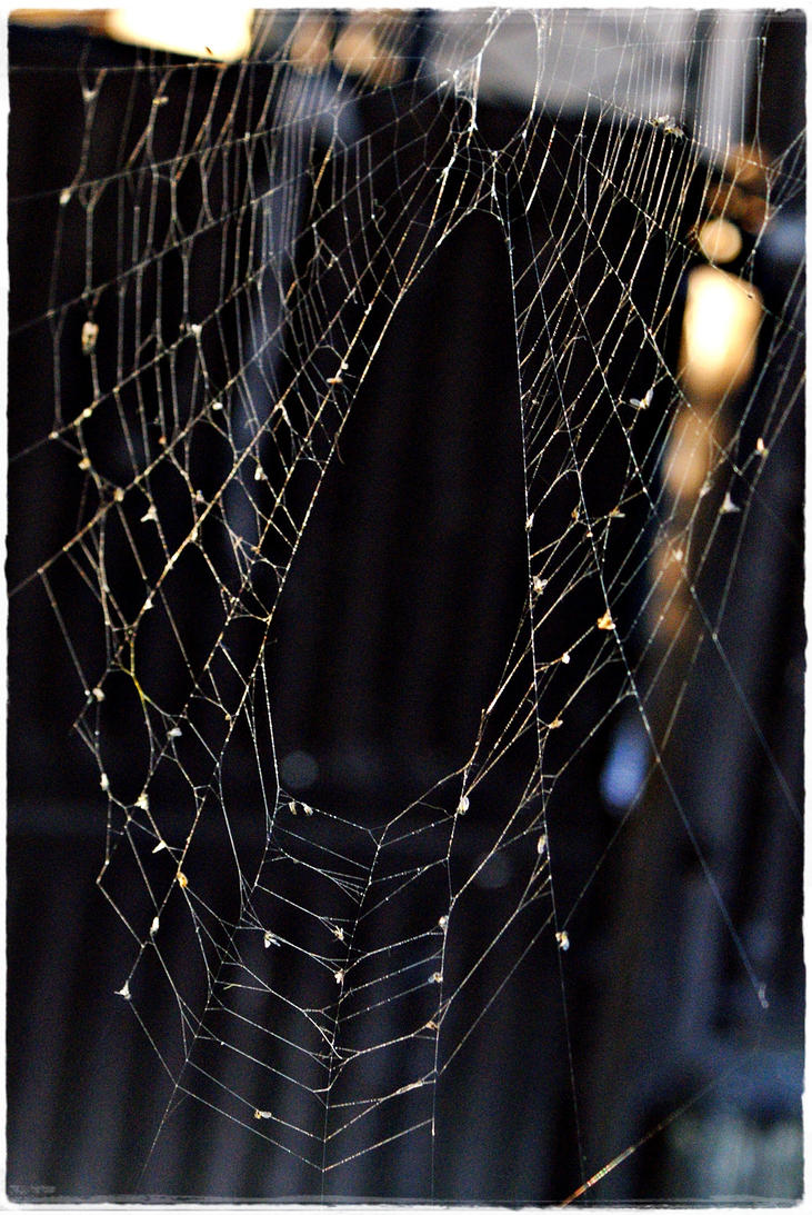 Spider 3 by Robert2908