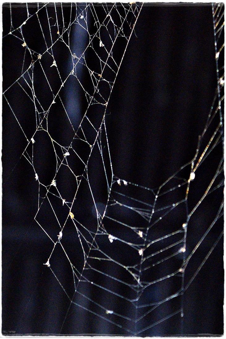 Spider 4 by Robert2908