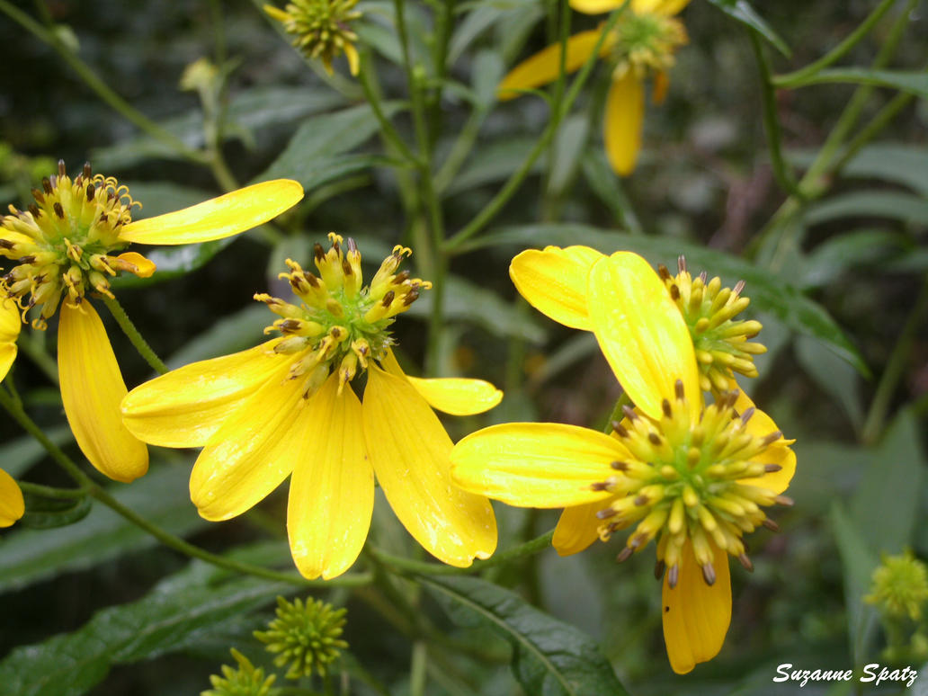 Yellow by dazzleflash