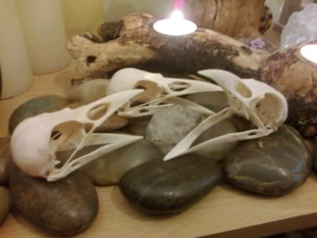 Huge real carrion crow skulls for sale by witch crafted on for Real art for sale
