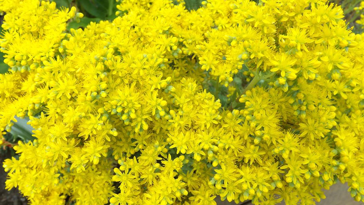 Tiny Yellow Flowers By Mc1964 On Deviantart