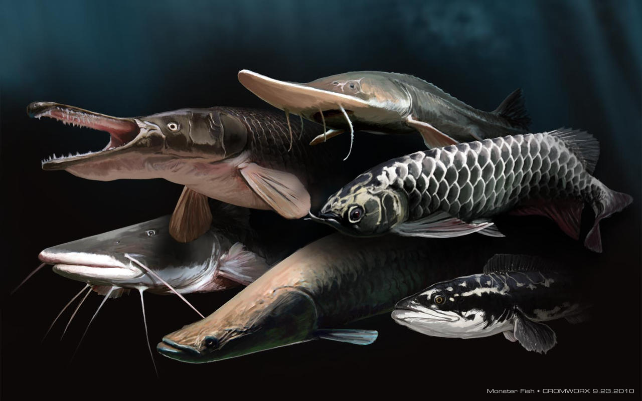 Monster Fishes by cromzl on DeviantArt