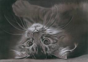 Macavaty's a mystery cat ... by Ileina
