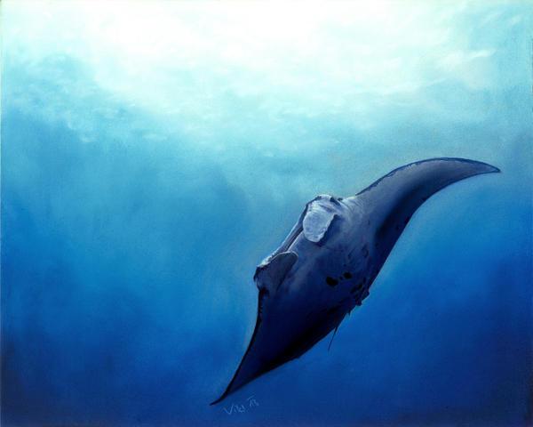 Manta ray by Ileina