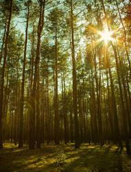 Peeking through the treetops