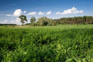 Polish Meadow