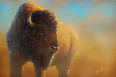 Bison final by LoganEDavis