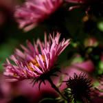 grandma's flowers.. by xBloodRedCheRrYx
