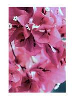 violett. by xBloodRedCheRrYx