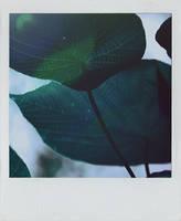 frueher morgen. by xBloodRedCheRrYx