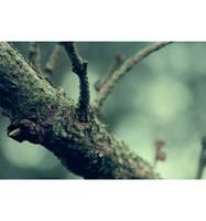 wald i by xBloodRedCheRrYx