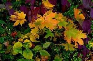 Herbstfarben IV