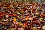 Herbstfarben V