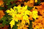Herbstfarben XI