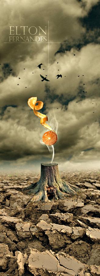 The Orange Tree by EltonFernandes