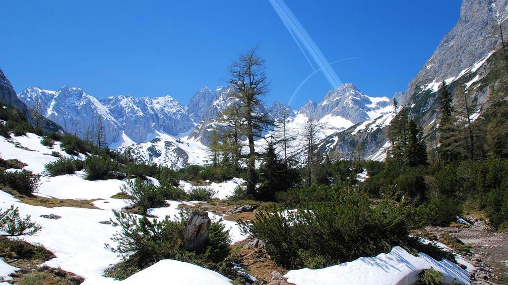 Mountain Pines by celdaran