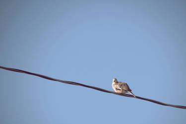 Pretty bird by bunnylavi