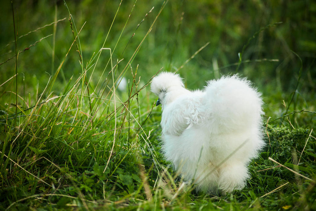 Fluffy Back by melintir