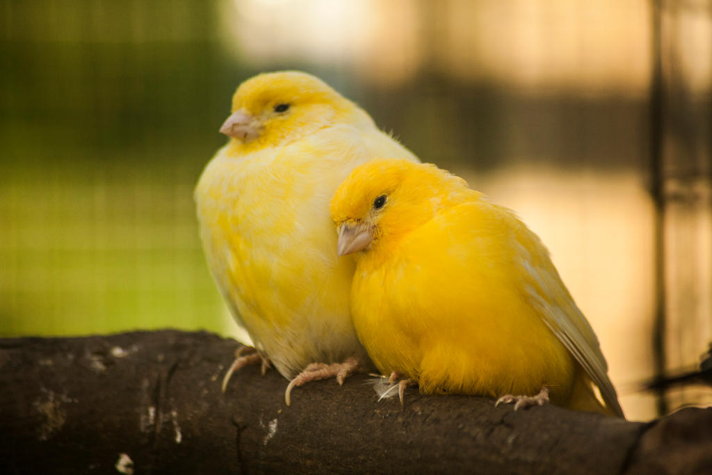 Love is Yellow by melintir