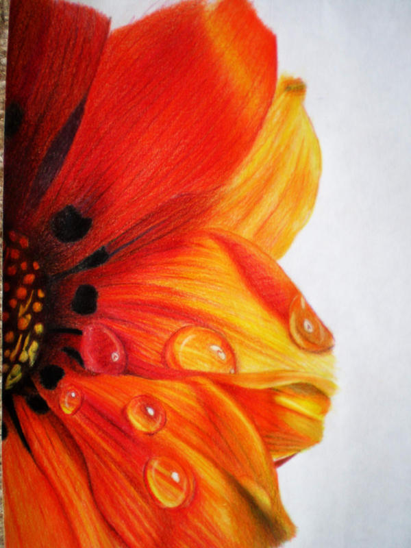 Colored Pencil Drawings Of Marbles : Colored pencil flower by tothelastparade on deviantart