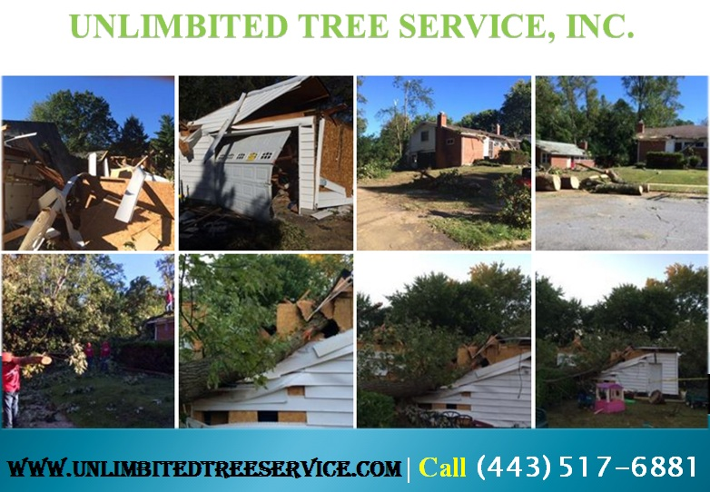 Expert storm damage columbia by unlimbitedtreeservic on for Columbia craft show 2017