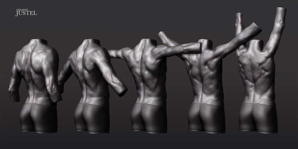 Male Torso: Back arm rotation sequence by CoffeeAndMarkers on DeviantArt