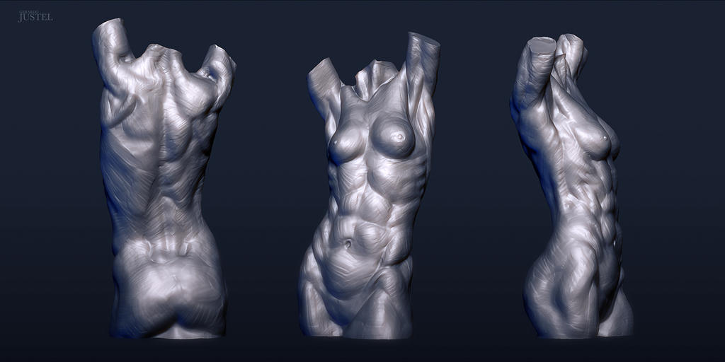 Anatomy 2013 - Female Torso by CoffeeAndMarkers on DeviantArt