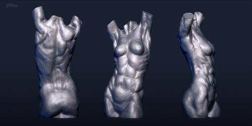 Anatomy 2013 - Female Torso