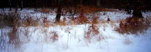 Winter by TransistorCat