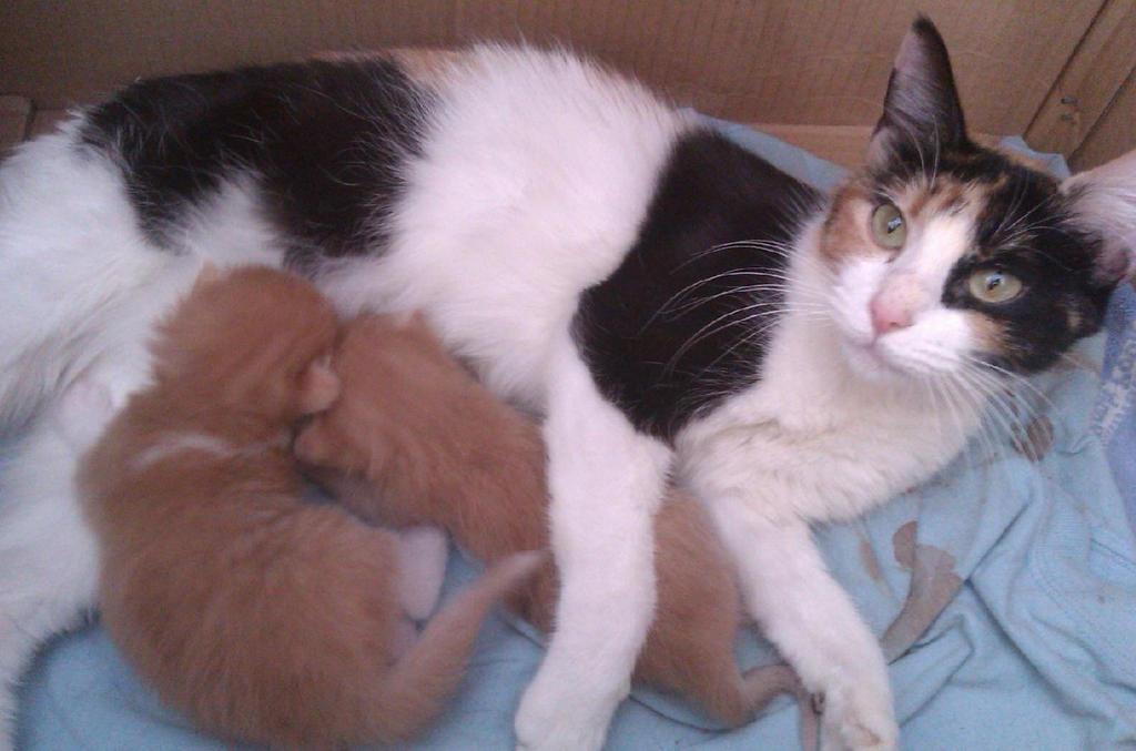 Motita y sus gatitos by krow000666