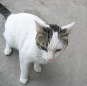 krow000666's Profile Picture