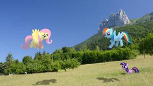 Ponies in Alpine meadow (MLP in real life)