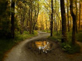 Forest by mpkHawkeye