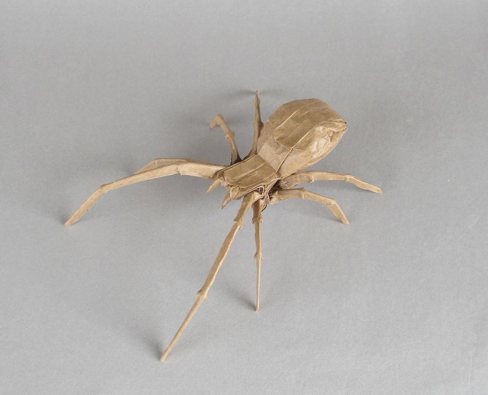 Brown Widow Spider [Robert Lang ] by Cahoonas