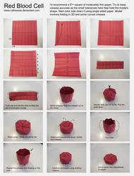 Red Blood Cell Photodiagram by Cahoonas
