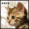 Cute kitten by netza