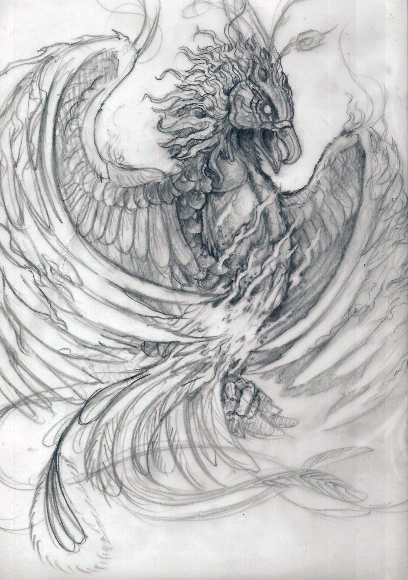 phoenix study sketch by posvibes on DeviantArt
