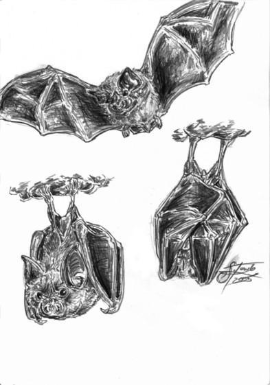 bats by branwolf