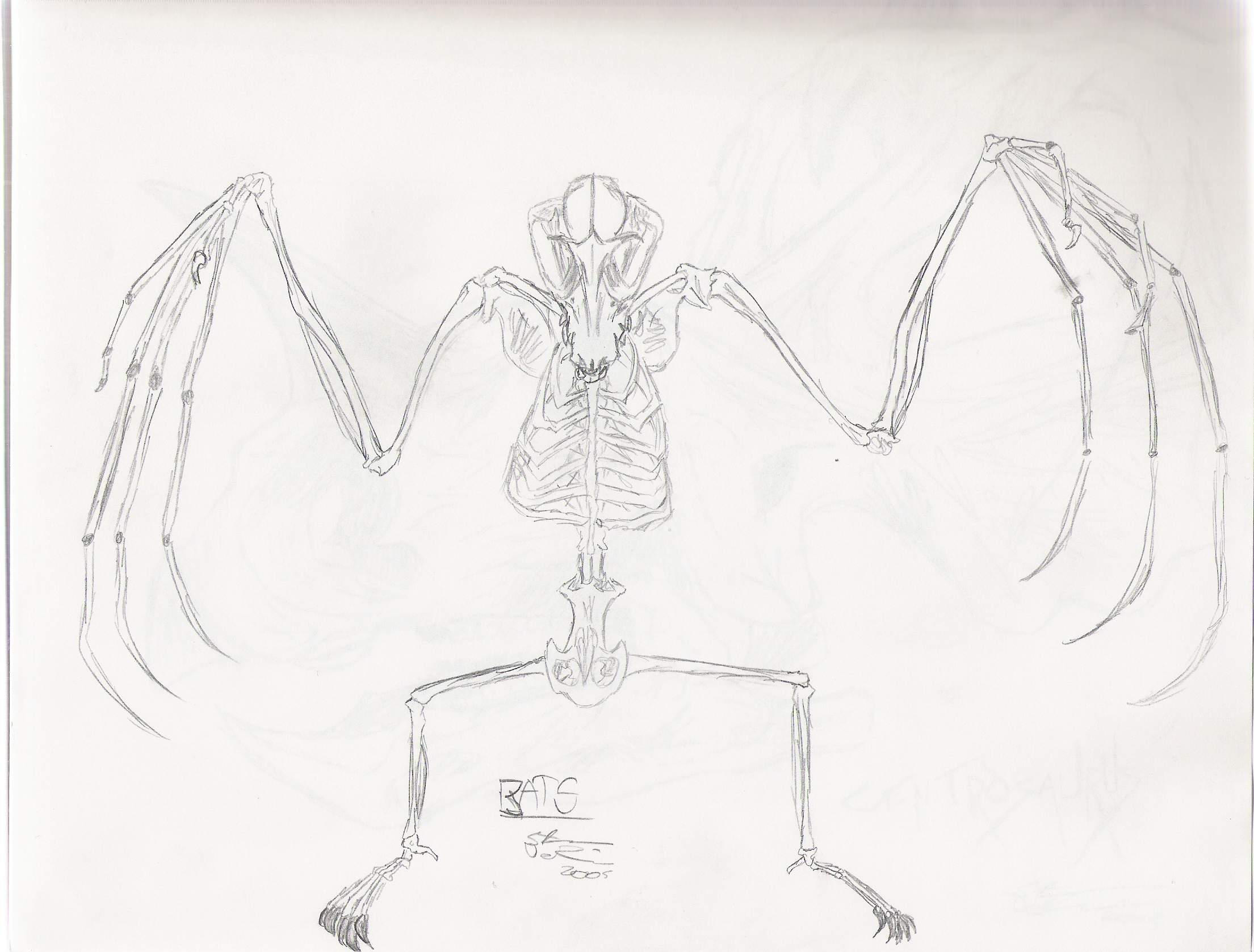 Bat skeleton drawing - photo#16
