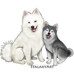 spitz dogs