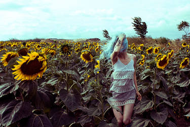 Sunflower Field I
