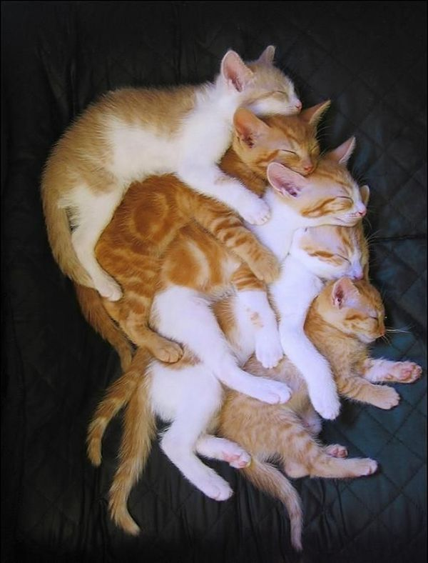 cat stack by crzlollipop