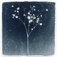 Photogram, Plant 3 by kapanaga