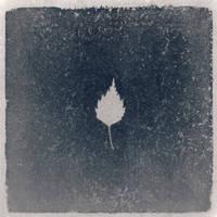 Photogram, Plant - 9