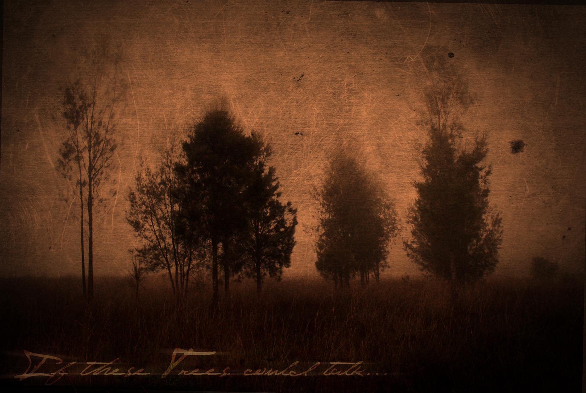 If_these_Trees_could_talk____by_DaishoKatana.jpg