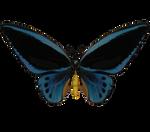 E-S Butterfly II